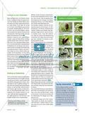Doldenblütler als Insektenmagneten - Pflanzen schaffen Lebensraum Preview 2