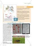 """Eine Pflanze als """"Raubtier"""" - Sonnentau ist an das Leben im Hochmoor angepasst Preview 2"""