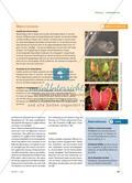 """Eine Pflanze als """"Raubtier"""" - Sonnentau ist an das Leben im Hochmoor angepasst Preview 4"""