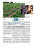 Von Batate bis Yams - Vielfalt der Grundnahrungsmittel in den Tropen Preview 2