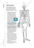 Skelett anziehen - Ein kleines Buch zur Figur Preview 2