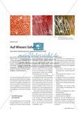 Auf Wiesen-Safari - Von einer Zeichnung zum reproduzierbaren Bild Preview 1