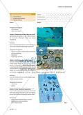 Ein Tauchabzeichen erwerben - Die Unterwasserwelt sicher beherrschen Preview 3