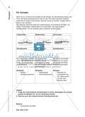 Die Grundschaltungen der Elektrizitätslehre - Materialien für das Lernen an Stationen zur selbstständigen Erarbeitung Preview 8