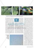 Sich ein Bild von der Natur machen - Fotografierte Natur- und Alltagsphänomene Preview 3