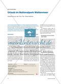 Urlaub im Nationalpark Wattenmeer: Heranführung an das Think – Pair – Share-Verfahren Preview 1
