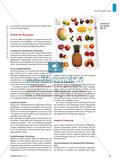 Let's Look It up! - Die Arbeit mit Bildwörterbüchern im Englischunterricht der Grundschule Preview 4