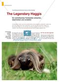 The Legendary Haggis - Ein (schottisches) Fantasietier entwerfen, beschreiben und vorstellen Preview 1