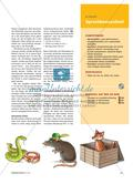 Towards Language Awareness - Mit dem Schriftbild die Sprachbewusstheit der Kinder fördern Preview 2