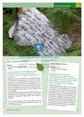 Ein Wandertag im Wald: Lausch- und Hörspiele in der Natur Preview 2