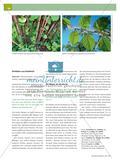Ein Wandertag im Wald: Lausch- und Hörspiele in der Natur Preview 5