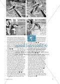 """Springen wie """"Flipper"""" - Eine methodische Übungsreihe zum Kopfsprung Preview 4"""