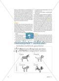 Akrobatik im Team - Förderung der Teambildung in der Grundschule Preview 5