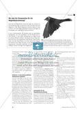 Wie finden Zugvögel den richtigen Weg? - Navigieren im Magnetfeld der Erde Preview 7