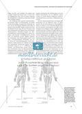 Die menschliche Evolution aus fachwissenschaftlicher Perspektive Preview 2