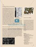 Bäume wachsen nicht nur in den Himmel - Naturmaterial mit bildnerischen Mitteln untersuchen Preview 4