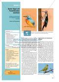 Bunte Vögel mit Pastellkreiden zeichnen - Technik und Wirkungen von Kreidezeichnungen erproben Preview 1
