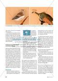 Bunte Vögel mit Pastellkreiden zeichnen - Technik und Wirkungen von Kreidezeichnungen erproben Preview 2