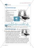 Der Seidenlaubenvogel und sein Balzverhalten Preview 4
