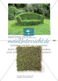 Pflanzen als Material und Konstrukt der Kunst Preview 6