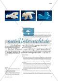 Katzen-Körper - Skulpierendes Arbeiten mit verschiedenen Materialien Preview 3
