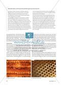 Honig und Wachs - Zur Vermittlung der Beuys'schen Materialikonologie Preview 3
