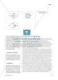 Nudel-Design - Entwicklung eines essbaren Prototyps Preview 2