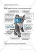 Steckbrief und Gehegeschild für Eichhörnchen und Koala Preview 4