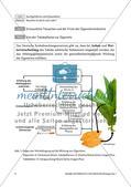 Die Wirkung der Zusatzstoffe und die Ziele der Tabakindustrie Preview 2