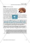 Das Eichhörnchen und der Igel im Vergleich Preview 5
