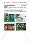 Naturmaterialien: Landart Preview 13