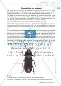 Eine Mehlkäferzucht und die Merkmale der Käfer Preview 4