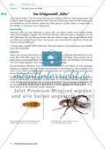 Eine Mehlkäferzucht und die Merkmale der Käfer Preview 5