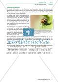Eine Mehlkäferzucht und die Merkmale der Käfer Preview 6