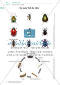 Eine Mehlkäferzucht und die Merkmale der Käfer Preview 7