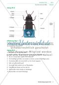 Eine Mehlkäferzucht und die Merkmale der Käfer Preview 8