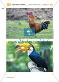 Vogel-Collage aus gepressten Laubblättern Preview 18