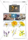 Heilpflanzen: Aufbau von Blütenpflanzen, Ringelblume Preview 1