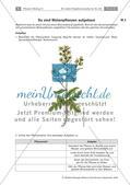 Heilpflanzen: Aufbau von Blütenpflanzen, Ringelblume Preview 5