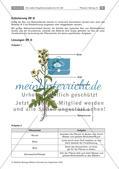 Heilpflanzen: Aufbau von Blütenpflanzen, Ringelblume Preview 6