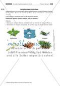 Heilpflanzen: Herstellen von Ringelblumensalbe und -öl, Preview 9