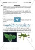 Pflanzen: Blätter, Sprossachsen Preview 3