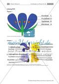 Pflanzen: Wurzel, Blüten aus Blättern, Pflanzenquiz Preview 11