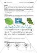 Pflanzen: Wurzel, Blüten aus Blättern, Pflanzenquiz Preview 13