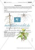 Pflanzen: Wurzel, Blüten aus Blättern, Pflanzenquiz Preview 1