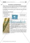 Pflanzen: Wurzel, Blüten aus Blättern, Pflanzenquiz Preview 2