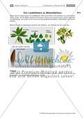 Pflanzen: Wurzel, Blüten aus Blättern, Pflanzenquiz Preview 7