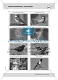 Januar: Vögel im Winter / Flechten bestimmen Preview 4