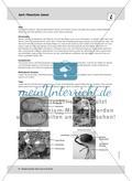 April: Nährstoffe für Frühblüher / Pflanzliche Samen Preview 4