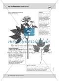 Mai: Pflanzenblüten als Insektenmagneten / Neuer Wohnraum für Insekten Preview 3